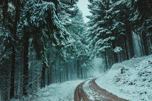 가지, 감기, 겨울, 겨울 풍경의 무료 스톡 사진