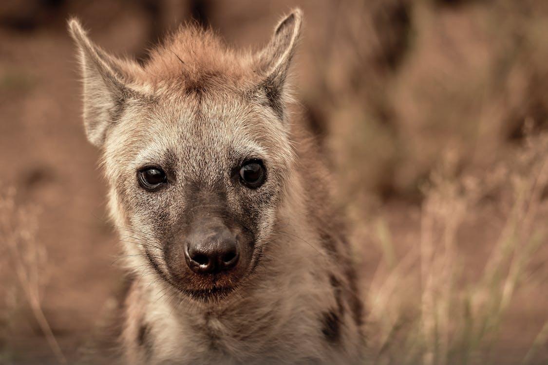 ameaça, animais selvagens, animal