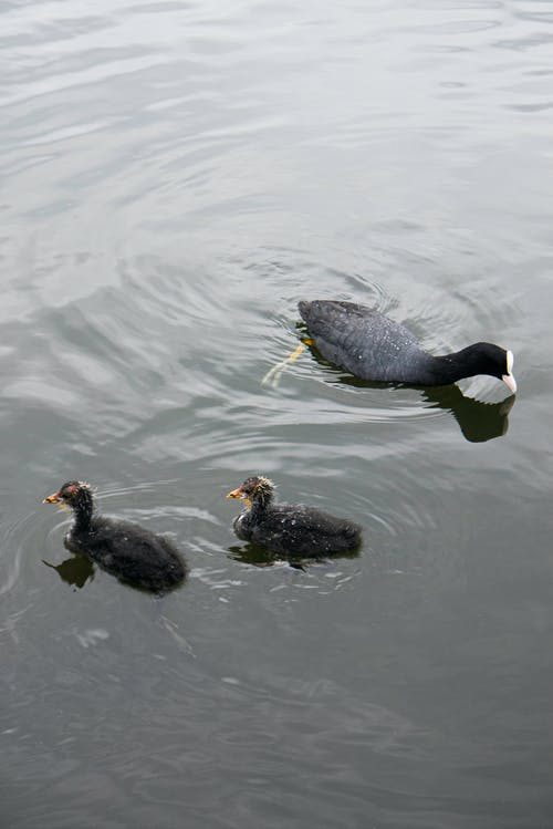 Free stock photo of aquatic, baby, care