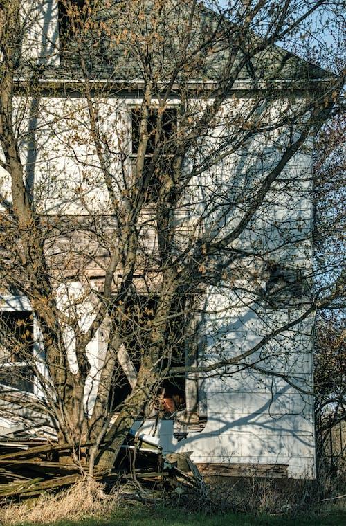 Fotobanka sbezplatnými fotkami na tému chladný, dedinský, exteriéry