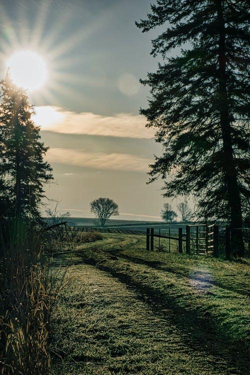 Fotobanka sbezplatnými fotkami na tému dedinský, exteriéry, hmla