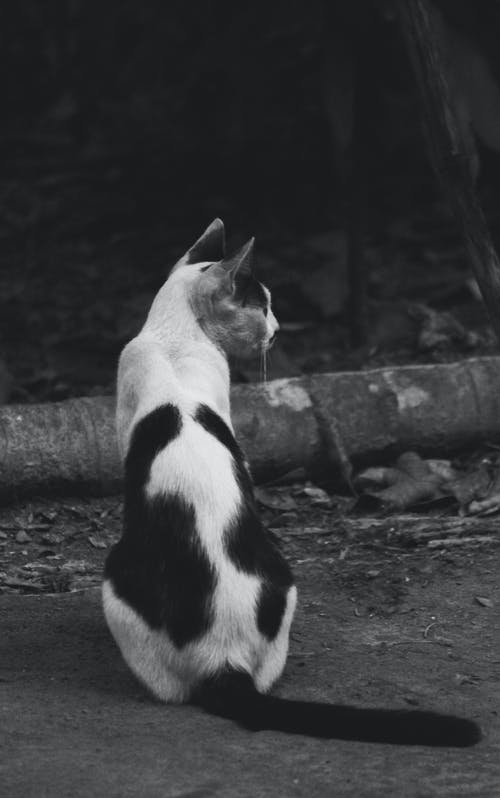 Photos gratuites de bengali, chat, chat bangladeshi