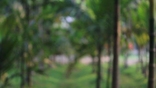 Photos gratuites de amoureux de la nature, arrière-plan, bangla vert