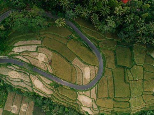 圖案, 土地, 增長 的 免費圖庫相片