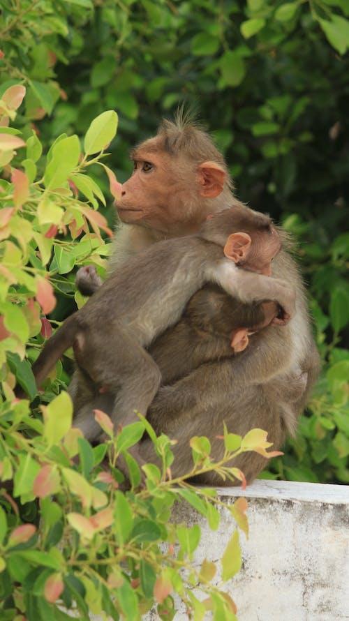 Free stock photo of baby monkey, monkey, monkeys