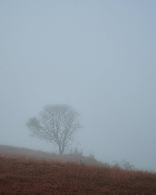 Leafless Tree on Brown Field