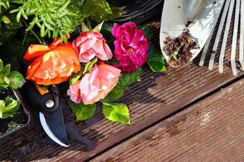Gratis stockfoto met tuin achtergrond, tuin gereedschap, tuinieren