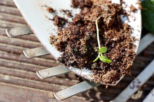Gratis stockfoto met bodem, grond, tuin gereedschap