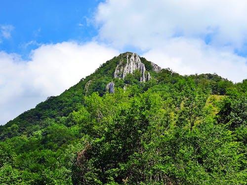 Darmowe zdjęcie z galerii z chmury, drzewa, flora, góra