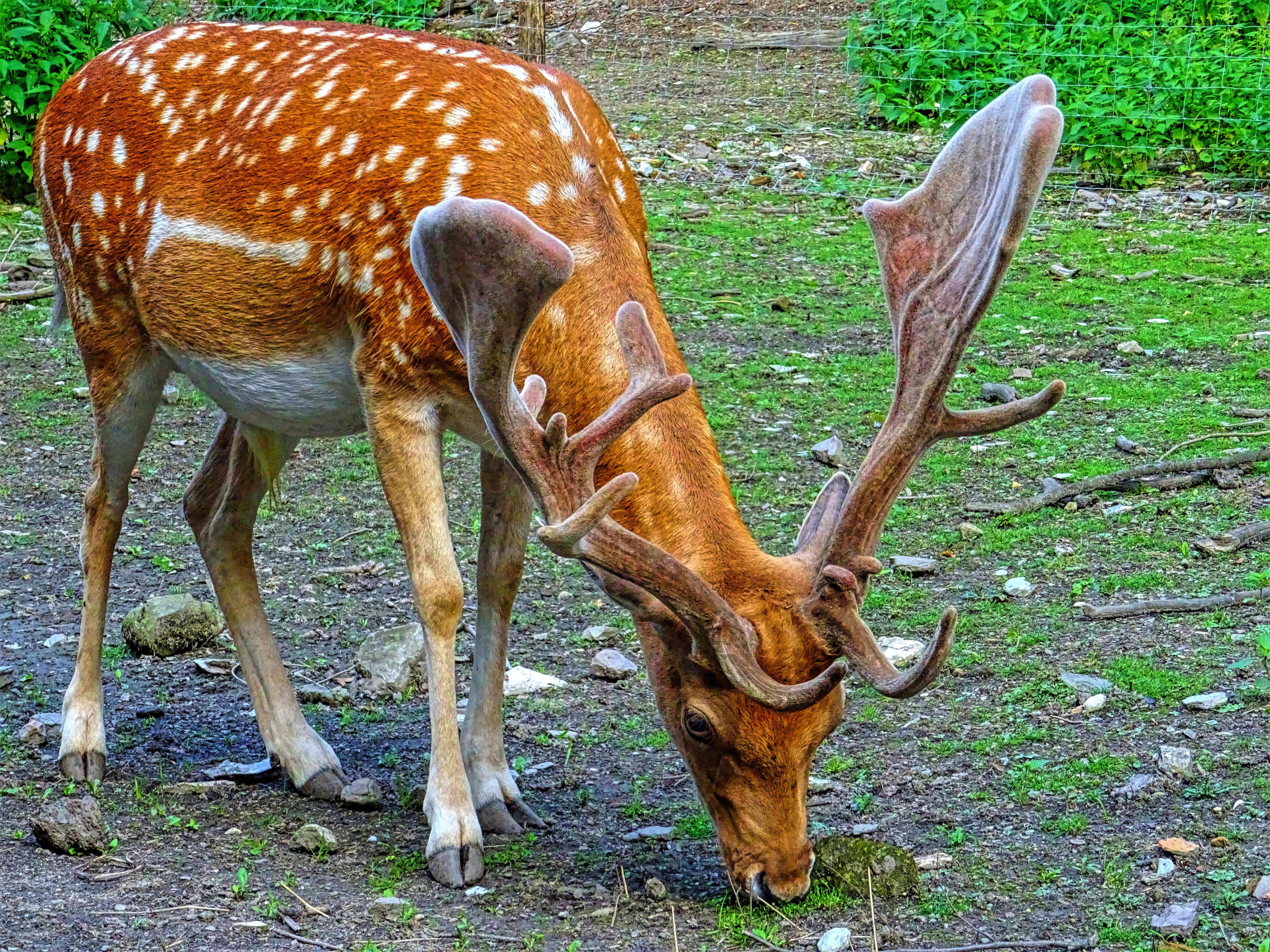 clôture électrique pour animaux sauvages