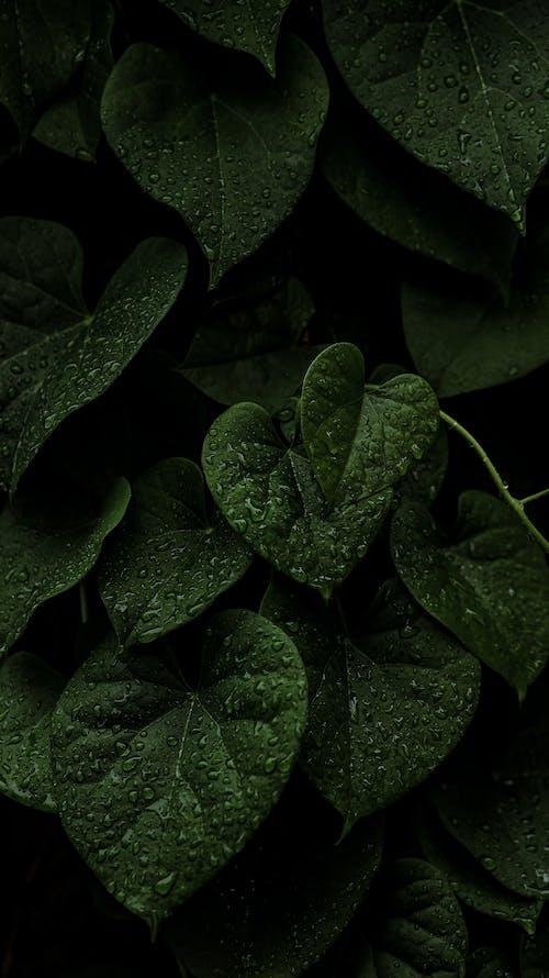 Free stock photo of dew, drop, fall