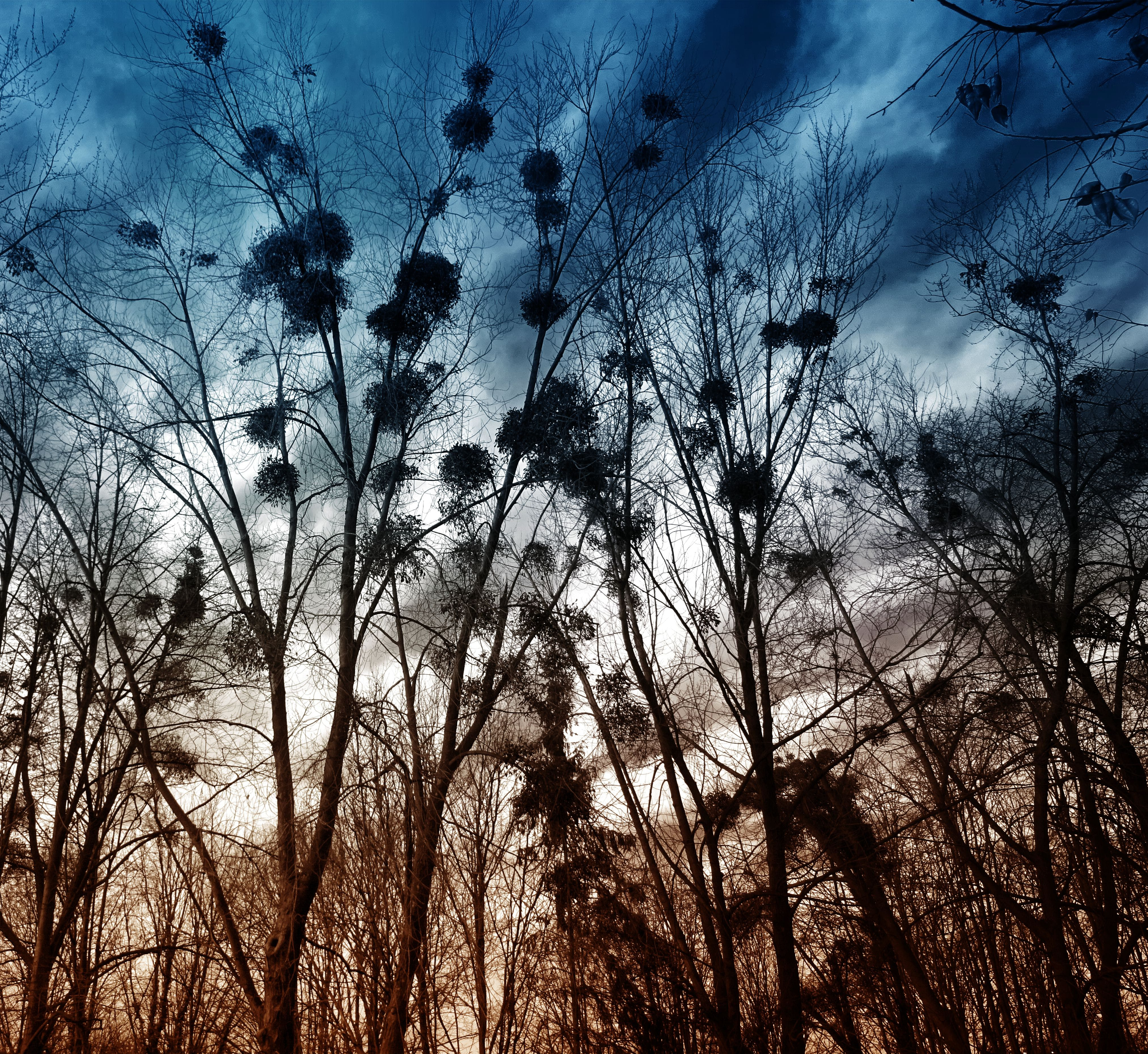 Silhouette of Trees Without Leaves