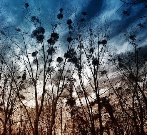 Fotobanka sbezplatnými fotkami na tému denné svetlo, farby, krajina, lesy