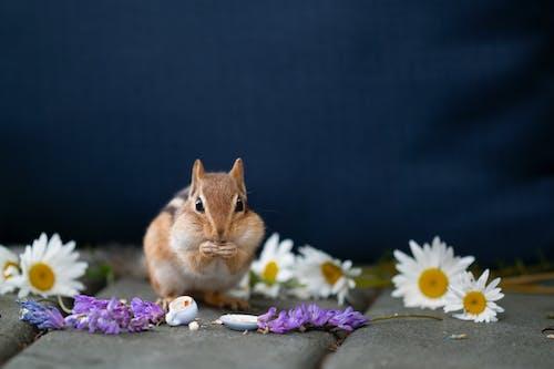 Foto stok gratis binatang, bulu, bunga