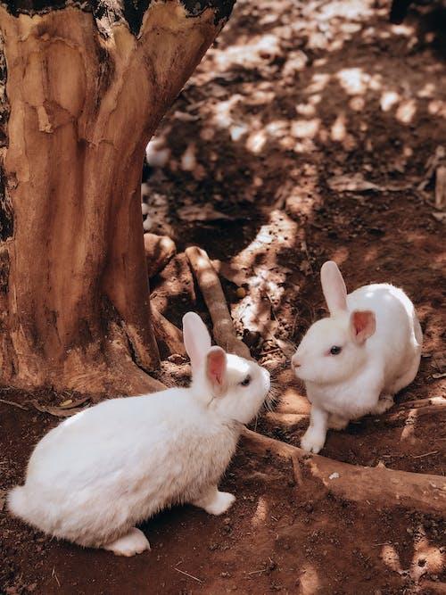 White Rabbit near Brown Tree Trunk