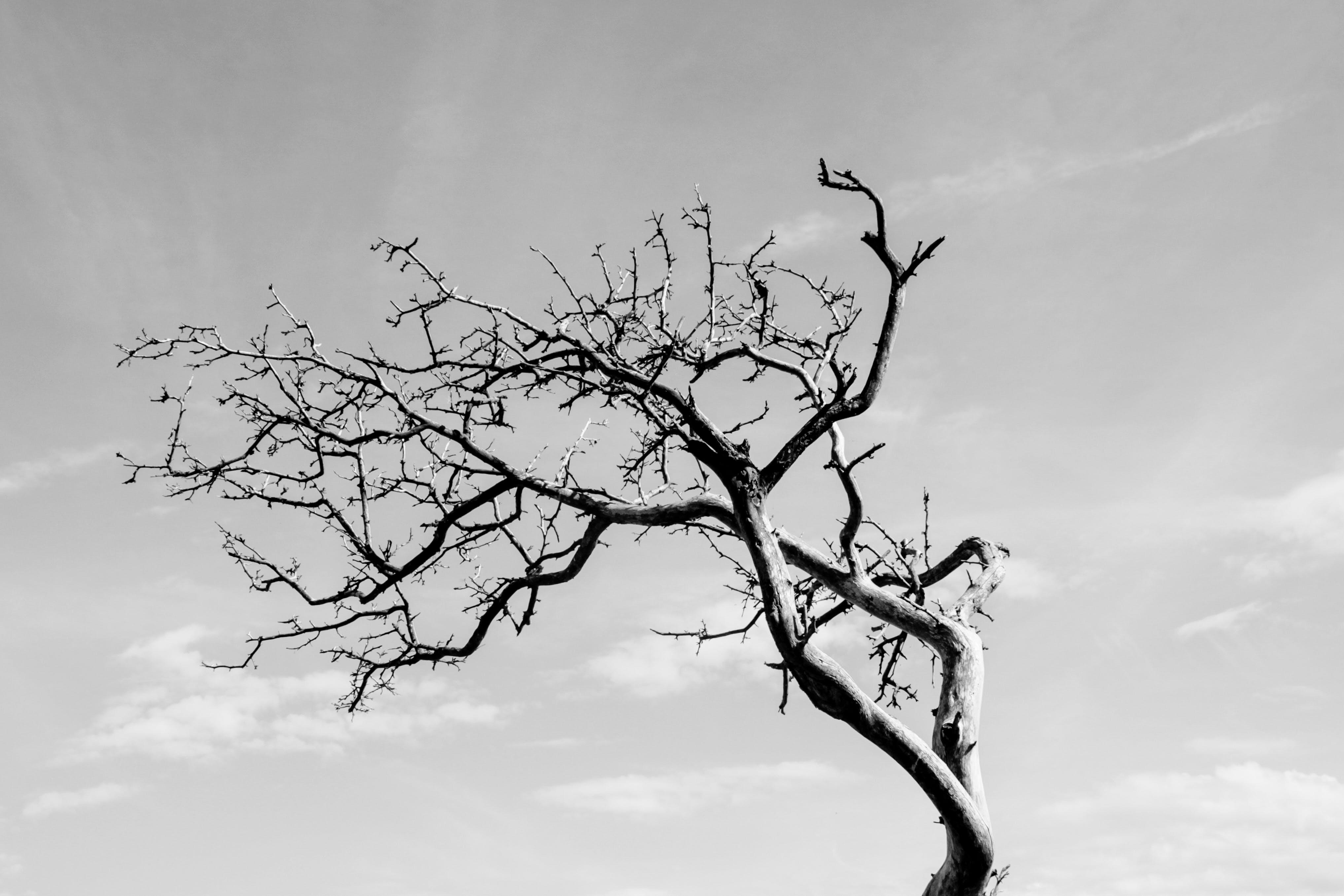 Free stock photo of black white, dancing tree, free, nature