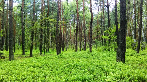 Free stock photo of forest, tree, green