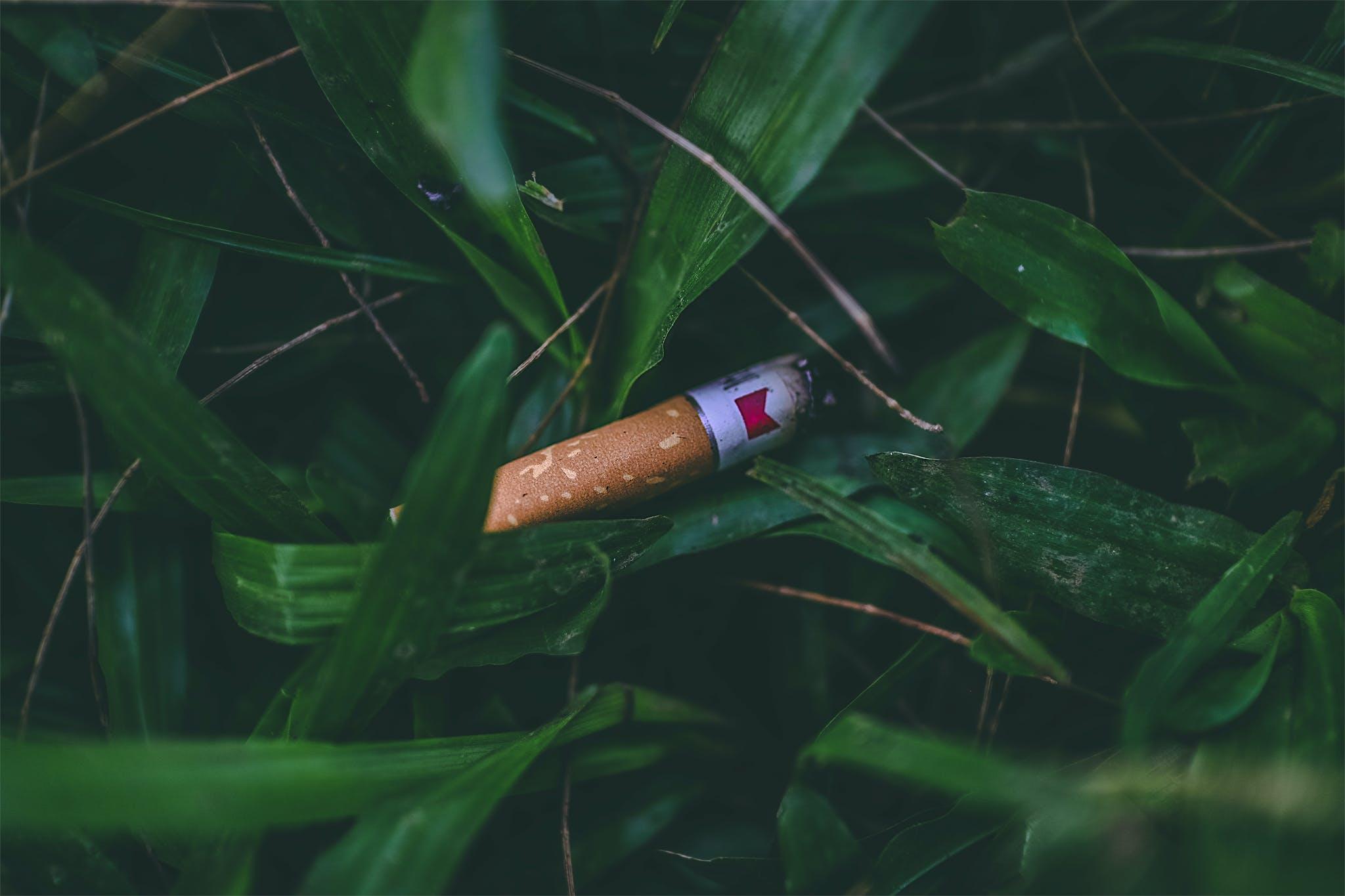 Základová fotografie zdarma na téma cigareta, doutník, nebezpečné, požár