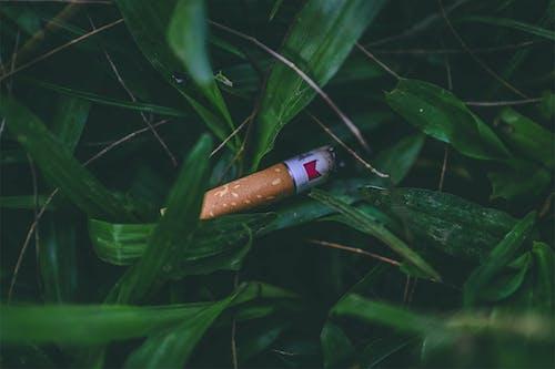 Free stock photo of cigar, cigarette, dangerous, dark green