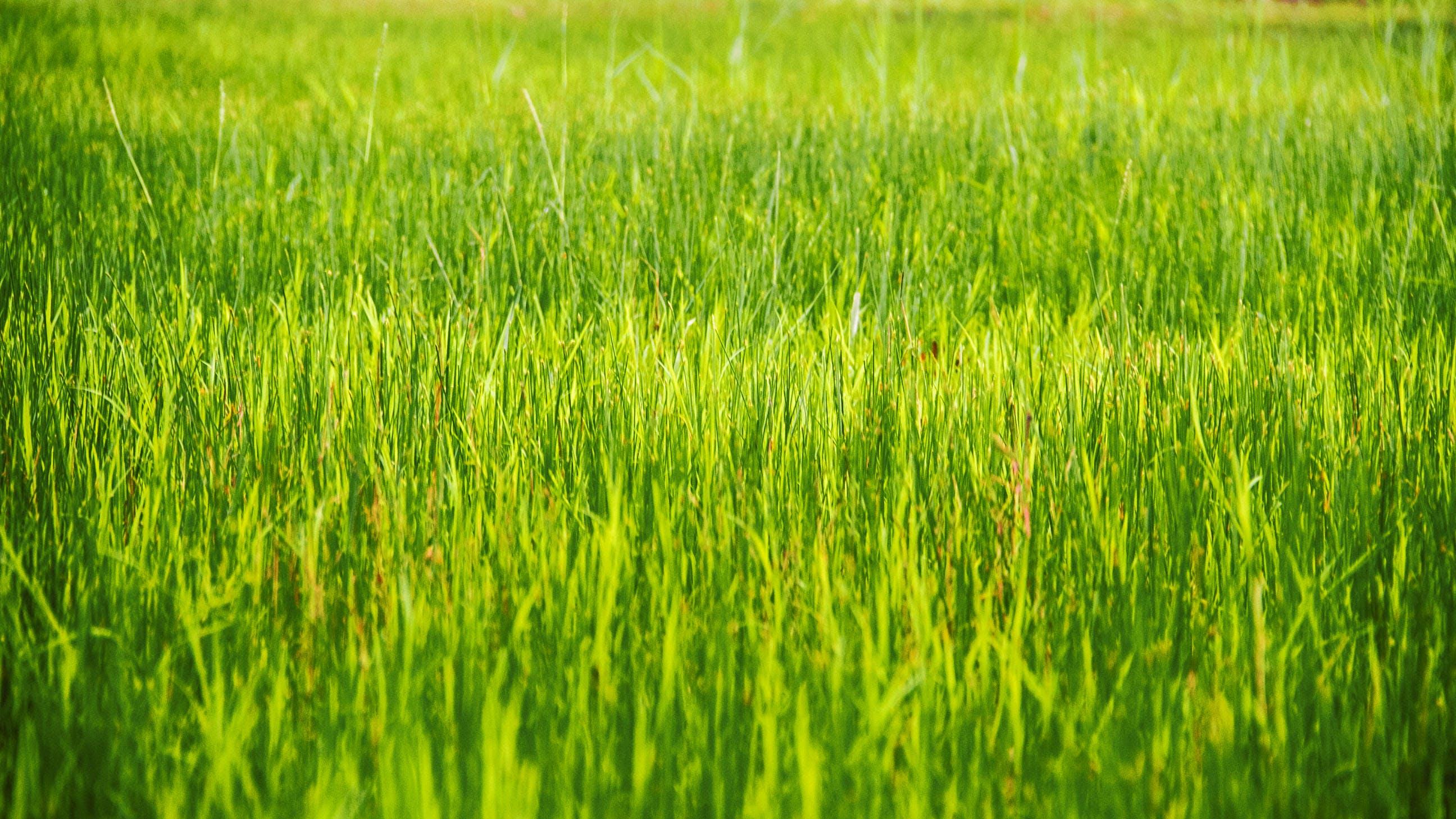 Grass Plain