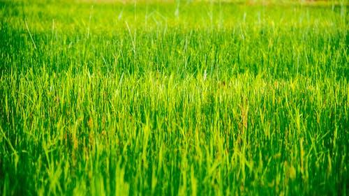 Foto profissional grátis de área, aumento, chácara, cultivo