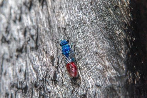 Free stock photo of animal, bee, bug