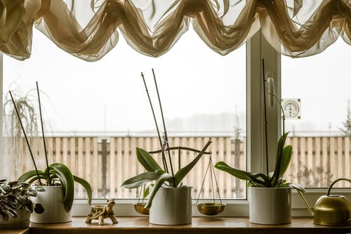 Free stock photo of cozy, home decor, home interior, houseplants
