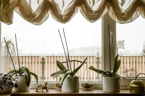 內部, 冬季, 室內植物, 家居裝飾 的 免費圖庫相片