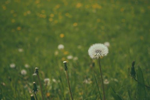 คลังภาพถ่ายฟรี ของ ความคิดถึง, ทุ่งสีเขียว, ทุ่งโล่ง, พฤกษชาติ