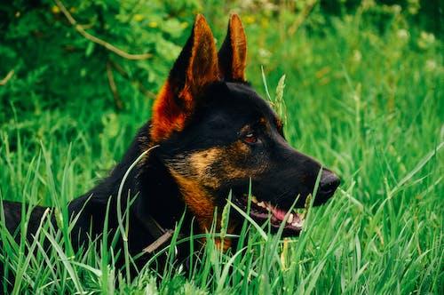 動物, 可愛, 寵物, 犬 的 免費圖庫相片