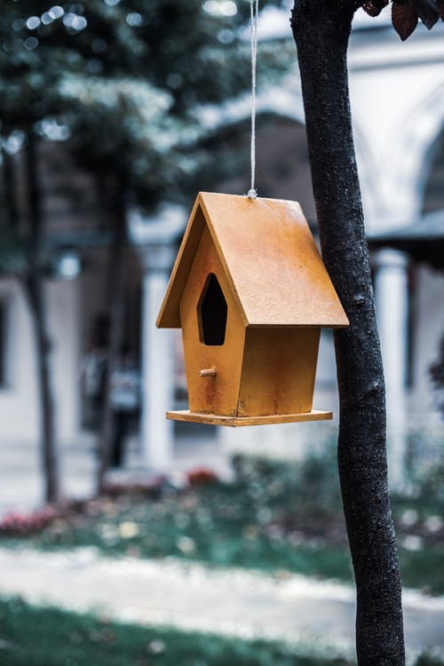 Brown Wooden Bird House Hanging on Tree Branch