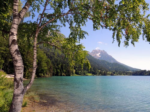 Free stock photo of birch, blue lake, mountain lake