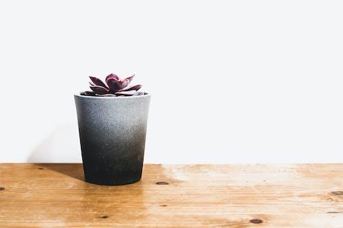 Бесплатное стоковое фото с белый фон, ботанический, в помещении, горшок