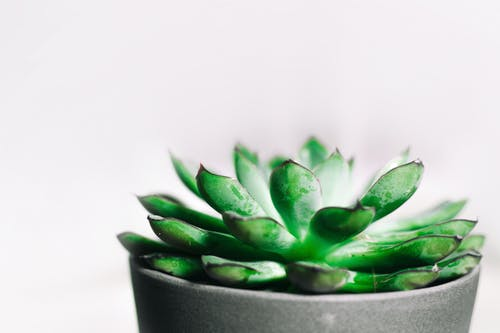 Closeup Photography of Green Succulent Plant in Gray Pot