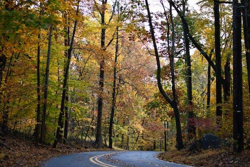 Foto stok gratis alam, bimbingan, dedaunan