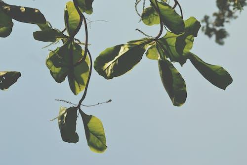 Free stock photo of beautiful, green, houseplants, india