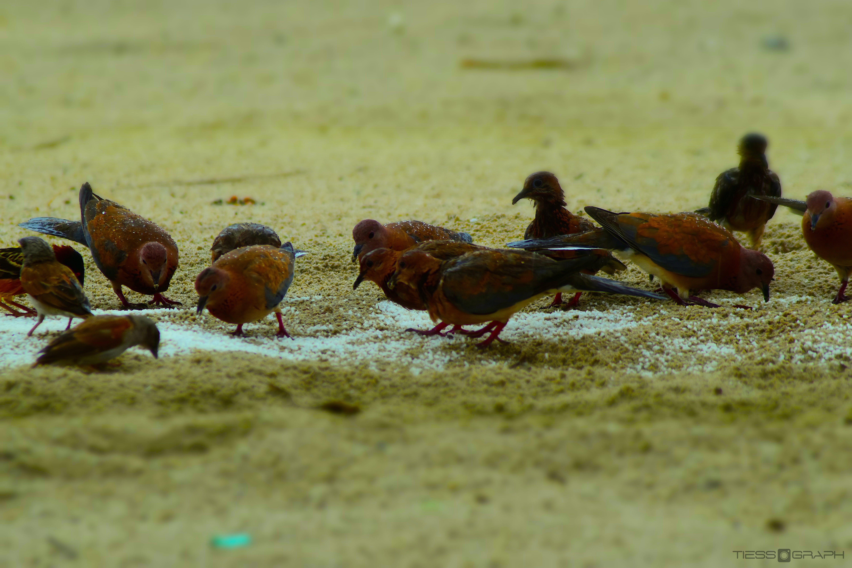 Free stock photo of animal, Assinie-Mafia, avian, beak