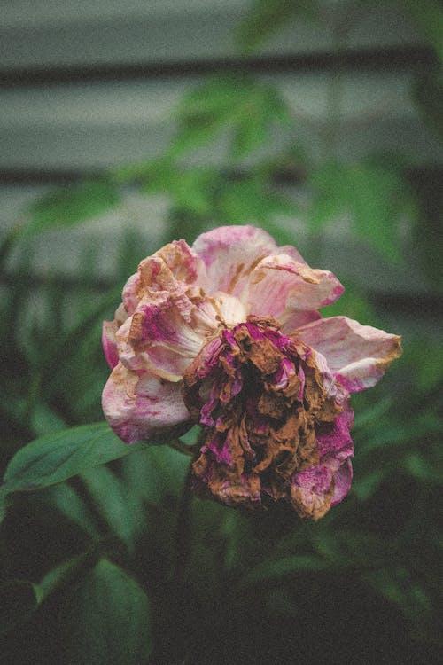 Gratis lagerfoto af årgang, blad, blomst