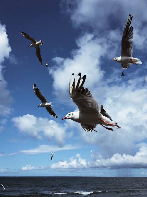 Kostenloses Stock Foto zu aufnahme von unten, bewölkt, blauer himmel