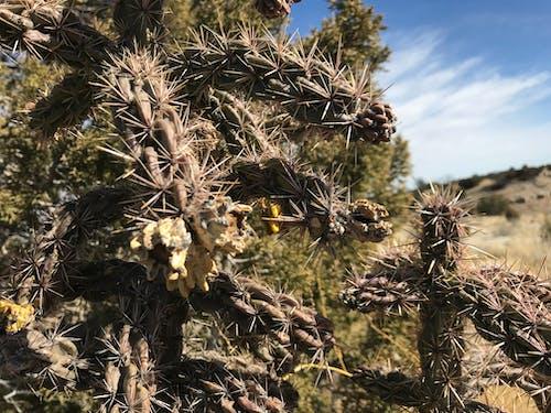 Foto d'estoc gratuïta de borrós, cactus, skye