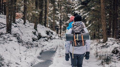 Foto profissional grátis de árvores, aventura, capô, casaco