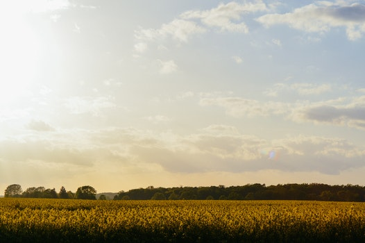 Free stock photo of dawn, landscape, sunset, field