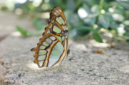 Immagine gratuita di ala, ali, animale