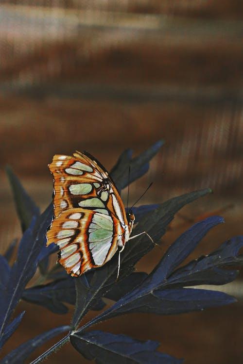 Immagine gratuita di ala, ali, ambiente