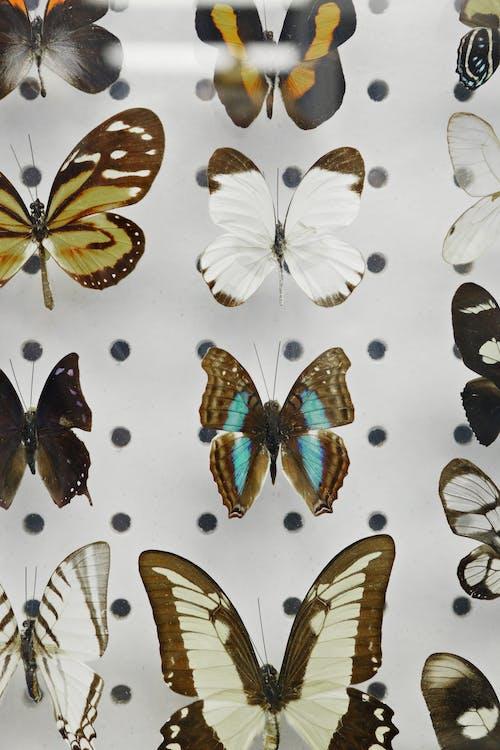 Immagine gratuita di ala, ali, ali di farfalla