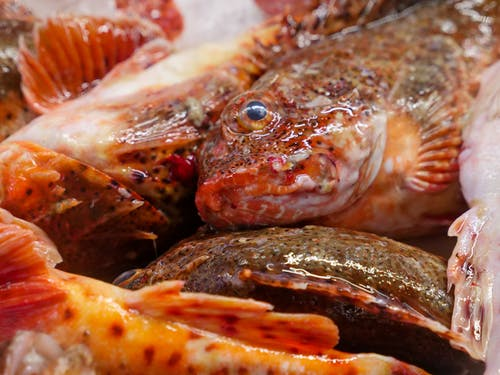 Free stock photo of catch of fish, cuisine, delicious