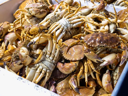 Brown and White Fresh Crabs In A Crate