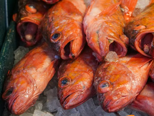 Stack of Red Snappers on Ice