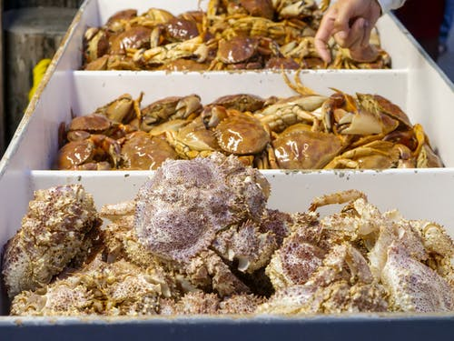 Fresh Crabs in Containers