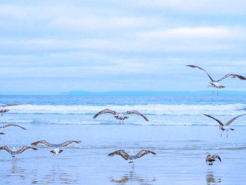 Чайки на берегу моря